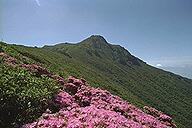 夏の大船山